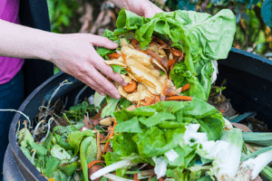what is the green in compost, how often should i turn compost