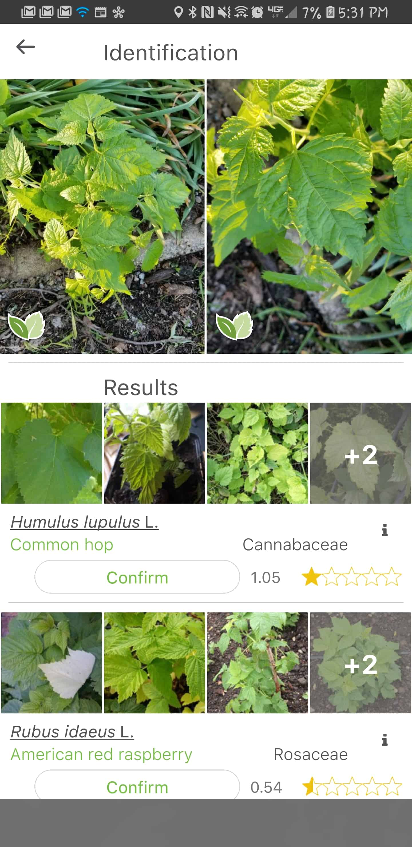 Best Plant Id Apps (How to identify plants on the homestead