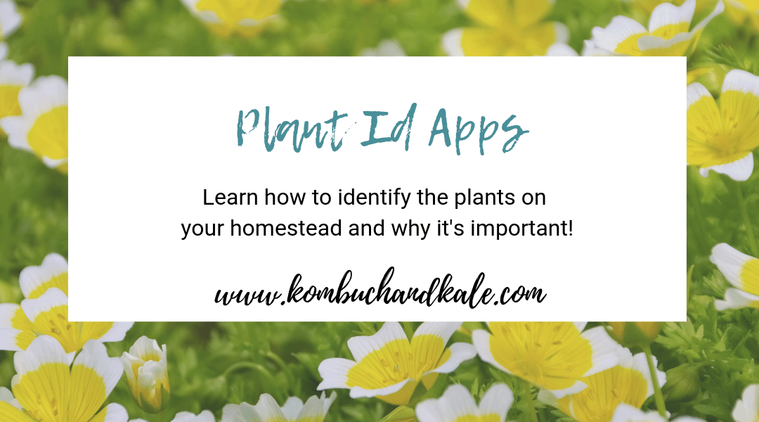 Best Plant Id Apps (How to identify plants on the homestead)